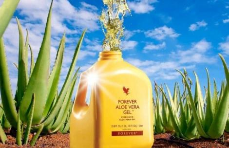World Leaders in Aloe Vera & Beehive Products